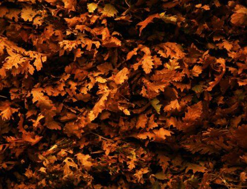 Δελτίο Αστρολογικών φαινομένων Οκτωβρίου